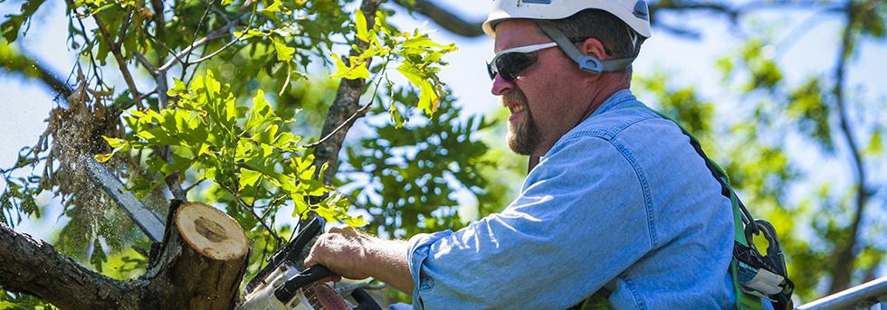tree pruning 02